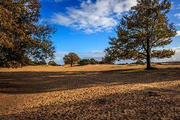 Kale duinen in de herfst van Rolf Linnemeijer