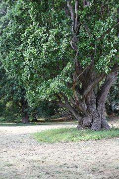 Vieil arbre sur Heike Hultsch