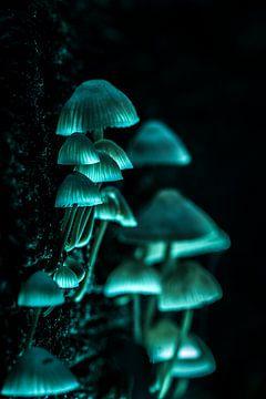Lichtgevende paddestoelen van FotoSynthese