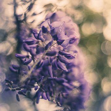 Blaues Träumen von Regina Steudte | photoGina