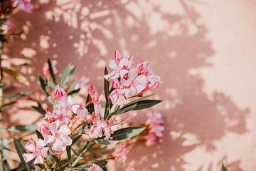 Bloemen muur met schaduw van shanine Roosingh