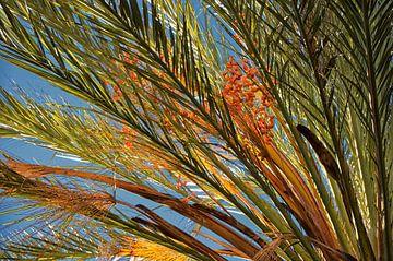 Palm met dadels van Iris Heuer