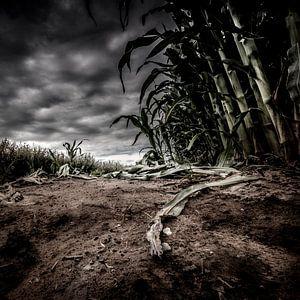 Between fields