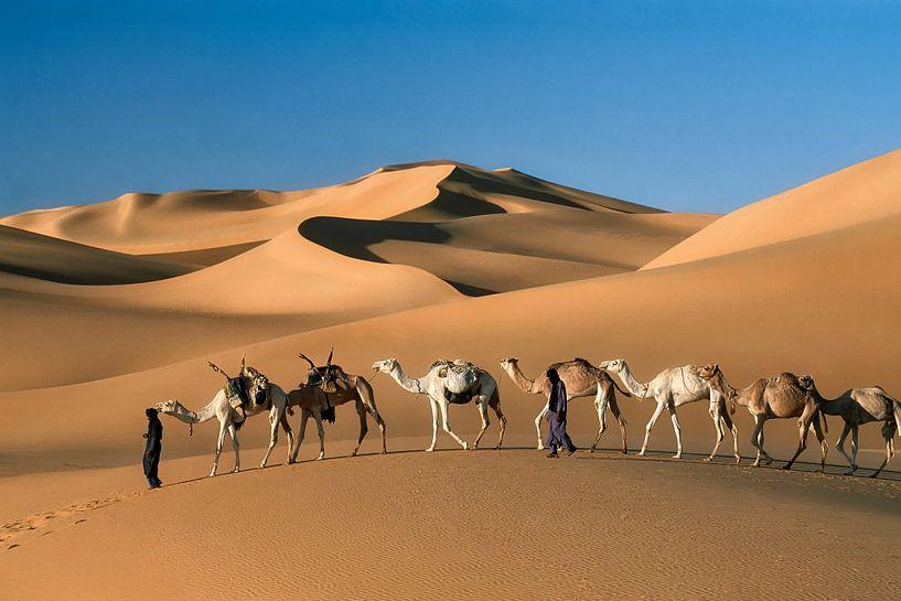 Désert du Sahara, caravane de chameaux sur Frans Lemmens