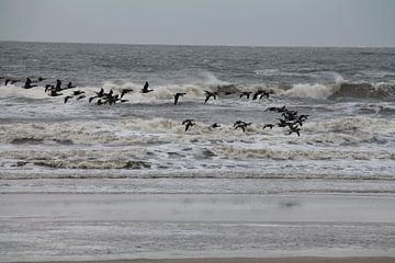 Wellenreiten in der Luft van Ulrich Fuchs