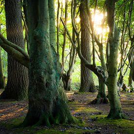 Lumière dans la forêt des contes de fées sur Martin Wasilewski