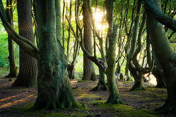 Licht im Märchenwald von Martin Wasilewski