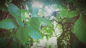 Natuur sur Ria De Jonge