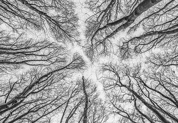 Hohe Baumkronen in Amsterdam von Leanne van Iersel
