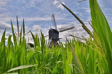 Hollandse water wipmolen boven het mais van John Wiersma