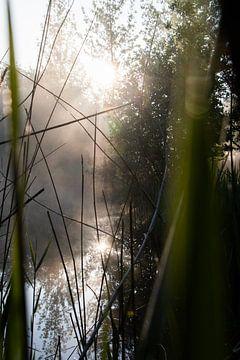 Nebel über Wasser von Renske van der Leij