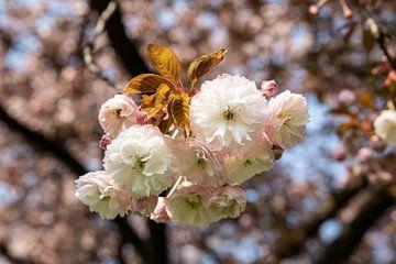 Frühlingstage im Park in Sittard von Wendy Boon
