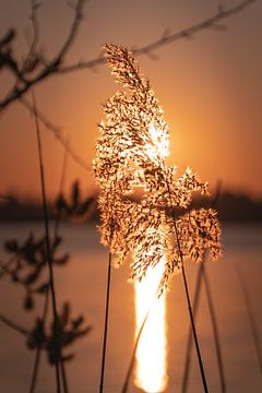 Frühe Morgensonne von Yme Raafs