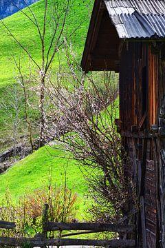 Spring in the Val di Funes van Gisela Scheffbuch