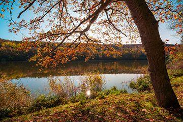 Eik op het meer van Martin Wasilewski