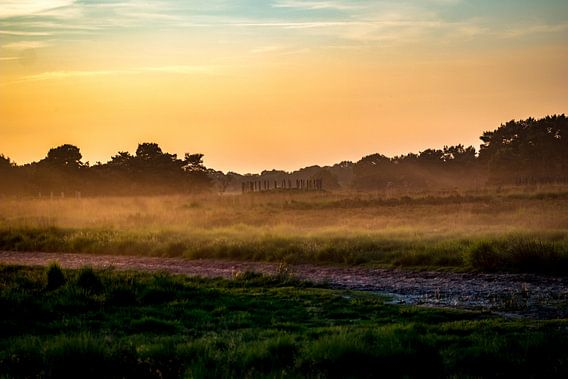 Grafheuvel met veld