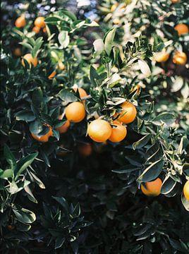 Orangen | Schwermütige bunte Reisefotografie | Botanische grüne Wand mit Orangen von Raisa Zwart