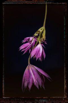 Oude Bloemen 2 van Henk Leijen