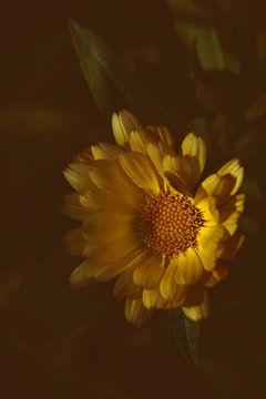 Blume gelb von Saskia Schotanus