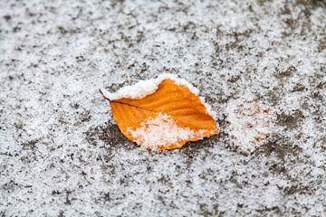 Herfstblad in de sneeuw van Nel Diepstraten