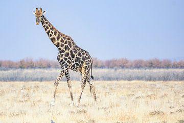 Giraffe in Etosha National Park van Jurgen Hermse