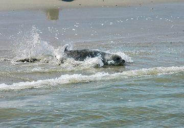 Waddenzee Zeehonden.