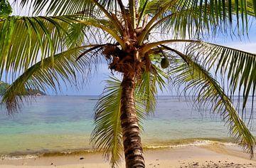 Blick durch eine Palme am Strand der Seychellen von MPfoto71