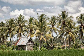 Ubud op het eiland Bali - Indonesie van Dries van Assen