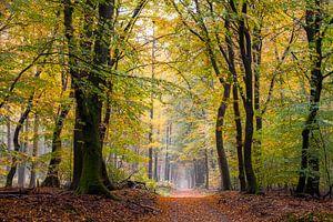 Tel alle bladeren van Tvurk Photography