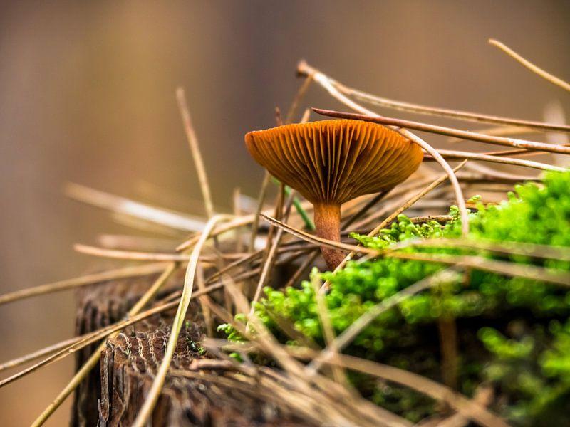 Waldpilz von Martijn Tilroe