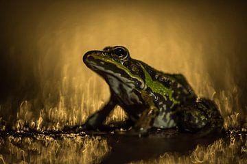Groene kikker van Douwe Schut