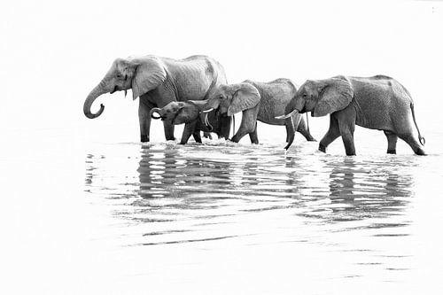 Drinkende olifanten in rivier in Zambia