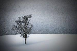 LONELY TREE Idyllic Winterlandscape