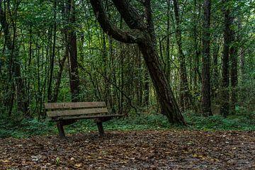 Bankje in het bos von Patrick Vischschraper