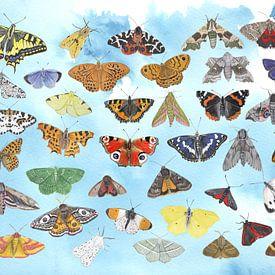 Een lucht vol vlinders van Jasper de Ruiter