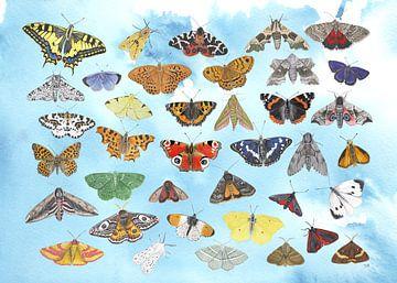 Ein Himmel voller Schmetterlinge von Jasper de Ruiter