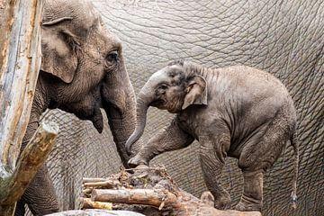 Mère éléphant et son petit. sur GiPanini