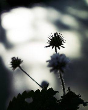 Licht en schaduw van Wijnand Kroes