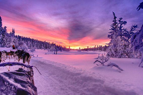 Zweedse zonsondergang bij een huskytocht