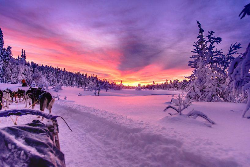 Zweedse zonsondergang bij een huskytocht van Kevin Pluk