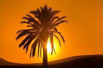 Palmboom en zonsondergang op Lanzarote, Canarische Eilanden, Spanje. van Harrie Muis