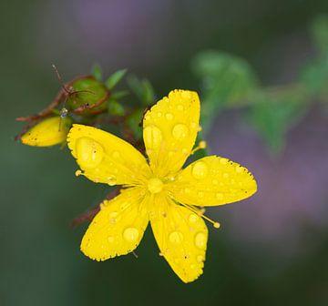 Dauw op bloem von Ingrid Ronde