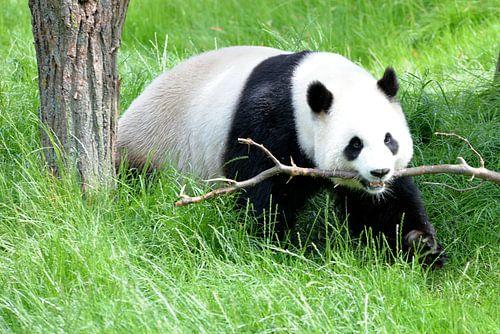 pandabeer speeltijd  van Emanuel Luyten