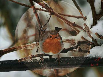 Songbird - Robin van Christine Nöhmeier