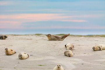 Seehunde im Wattenmeer von Dirk Rüter