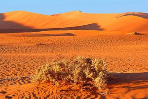 Zonsopgang landschap woestijn, Namibia, Sossusvlei