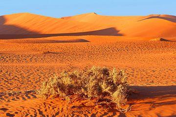 Zandduinen Namib woestijn van
