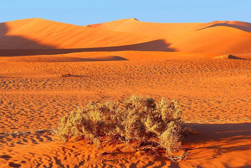 Zandduinen Namib woestijn van Inge Hogenbijl