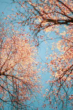 Koperkleuren in de herfst van Florian Kunde