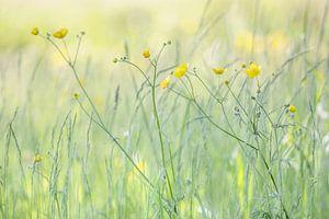 Butterblumen von Connie de Graaf